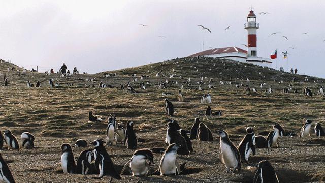 Pinguins presentes no Parque Nacional Isla Magdalena